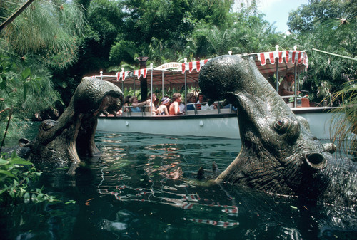 Jungle Cruise Remains Closed due to Hurricane Irma CleanUp