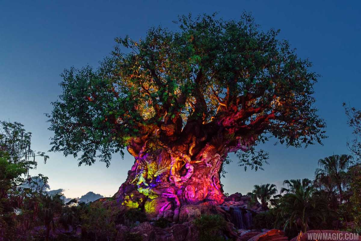 Disney's Animal Kingdom to Expand Viewing Areas for the Tree of Life Awakenings